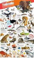 Animals  DKfindout! Posters