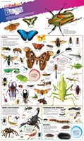 Bugs  DKfindout! Posters